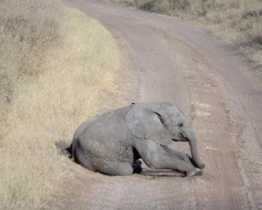 """Casal De Elefantes Espera Pacientemente Que a Sua Cria Acabe Com As """"Macacadas"""" 3"""