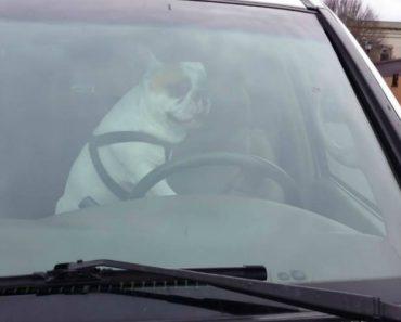 Veja o Que Este Cão Faz Quando Fica Sozinho No Carro 1