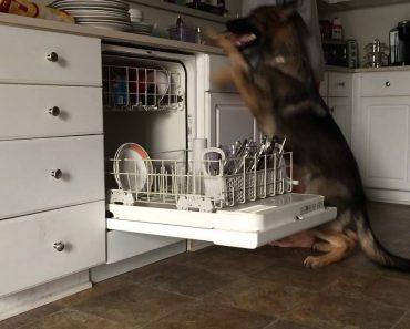 Quando Vir Este Vídeo Vai Tentar Ensinar o Mesmo Ao Seu Animal De Estimação 8