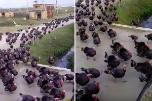 Perus Unem-se Em Protesto Contra o Natal 10
