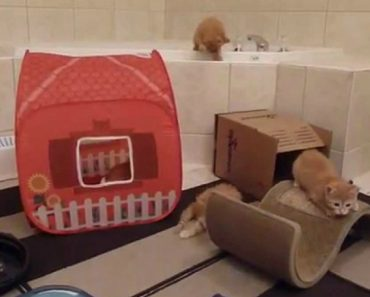 O Que Acontece Quando Se Adopta Seis Gatinhos 4
