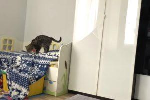 Gato Furtivo Rouba Cobertor De Casa e Sai Como Se Ninguém Estivesse a Ver 9