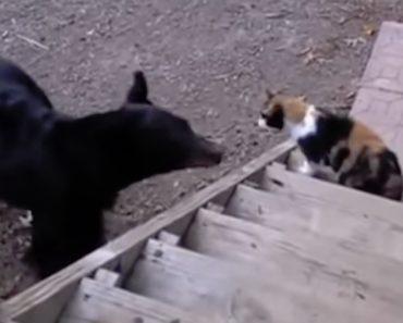 Gato Mostra a Urso Quem é o Dono Da Casa 1