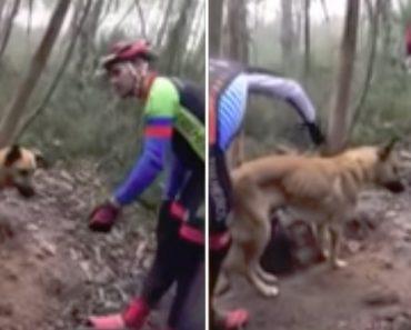 Ciclistas Salvam Cão Amarrado a Uma Árvore Na Serra De Pias Em Valongo 6