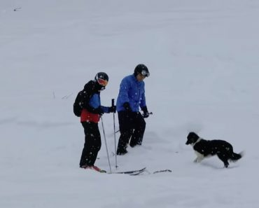 Cão Aproxima-se De Esquiadores Para Uma Missão Muito Importante 4