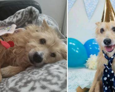 Mulher Salva Cão Violado Durante Cinco Anos 3