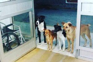 Cães De Homem Sem Abrigo Esperam Dono à Porta Do Hospital… e a Foto Torna-se Viral 10