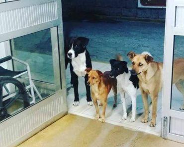 286e601a87 Cães De Homem Sem Abrigo Esperam Dono à Porta Do Hospital… e a Foto  Torna-se Viral