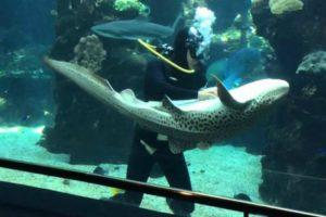 Um Mergulhador Está a Lavar o Vidro Do Aquário, Quando Chega o Tubarão Acontece o Impensável... 8