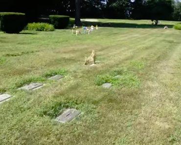 """Uma Ilusão De Ótica Que Permite Visualizar a """"Imagem"""" De Um Cão Por Cima Da Campa Onde está Enterrado 4"""