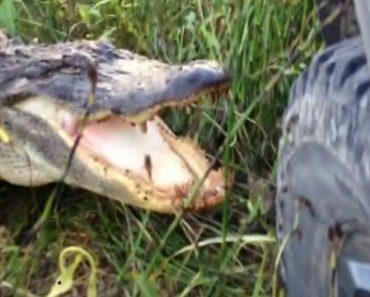 Crocodilo Destrói Frente De Jipe Apenas Com Uma Dentada 5