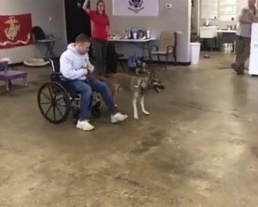 Vale a Pena Ver o Empenho Deste Cão  Durante Os Treinos Numa Academia Para Cães De Serviço 5