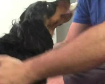 Dono Mostra Truque Que Usa Para Convencer o Seu Cão a Deixar Cortar As Unhas 4