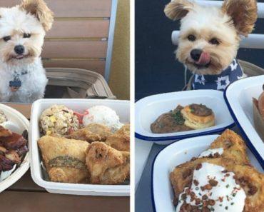 Cão Vivia Nas Ruas Esfomeado, Agora é Crítico Dos Mais Chiques Restaurantes Em Los Angeles 3
