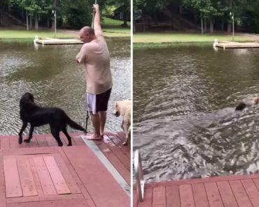 Cães Entram Em Pânico e Correm Para Salvar o Seu Dono Que Caiu à Água 4
