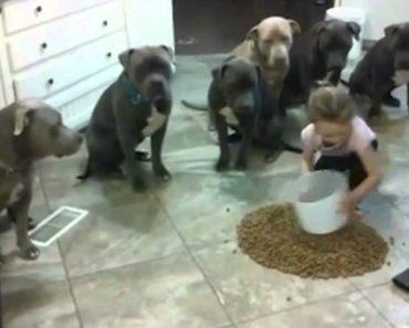 Menina De 4 Anos Controla e Alimenta 6 Pitbulls De Uma Só Vez 2
