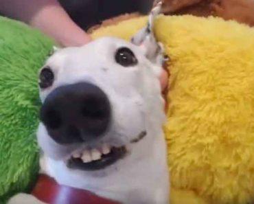Cadelinha Faz Som Peculiar Com Os Dentes Quanto Está Entusiasmada 1