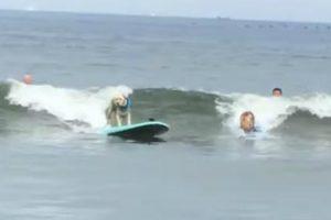 Cães Fazem Excelente Demonstração De Como Se Lida Com Os Imprevistos Do Surf 10