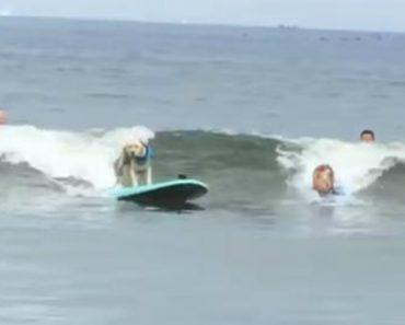Cães Fazem Excelente Demonstração De Como Se Lida Com Os Imprevistos Do Surf 3