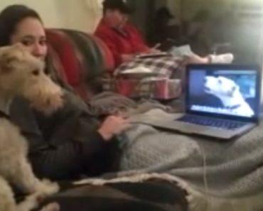 Cães Utilizam Skype Para Conversar Entre Si e Matar Saudades 2