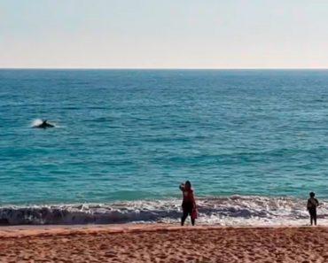"""Golfinhos Dão """"Espetáculo"""" Na Praia De Armação De Pêra 5"""