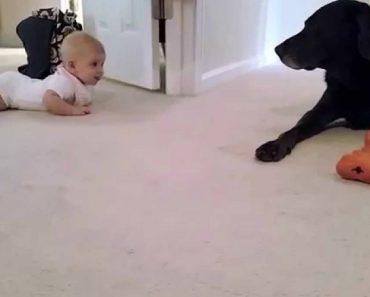 Bebé Gatinha Pela 1º Vez Para Ir Ao Encontro Do Seu Cão. O Final é Emocionante 3
