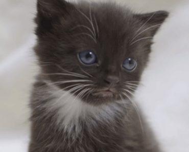 É Impossível Não Rir Ao Ver o Que Este Gato Faz Todas As Manhãs 4