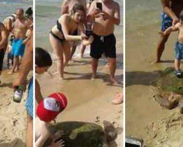Turistas Deixaram Tartaruga Gravemente Ferida Ao Tirarem Fotos Em Cima Dela 9