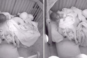 Menina Aconchega Pitbull Com Cobertor Na Hora De Dormir 10