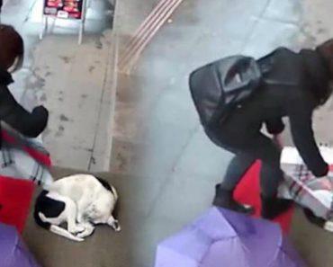 Câmara De Vigilância Capta Momento De Mulher A Usar Echarpe Para Tapar Cão Que Tremia De Frio Na Rua 2