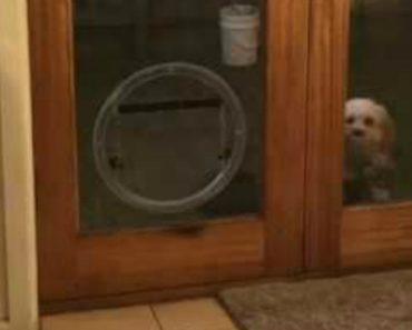 Confuso Cão Não Sabe Qual a Porta Certa Para Entrar Em Casa 2