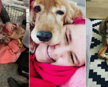 Dona Denuncia Morte Da Sua Cadela Em Porão De Avião Da TAP 6