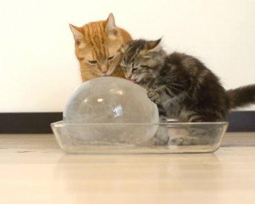 O Que Fazem 10 Gatos Ao Verem Uma Bola De Gelo 4