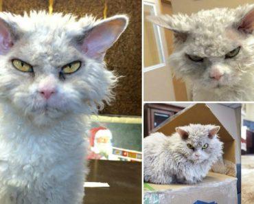 """Conheça Alberto """"o Pomposo""""… o Gato Mais Rabugento Do Instagram! 2"""
