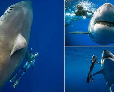 """Mergulhadores São Surpreendidos Pela Aparição Rara Do Gigante Tubarão-Branco """"Deep Blue"""" 9"""