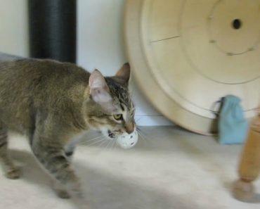 Dono Cria Invulgar Dispensador De Comida Para o Seu Gato 4