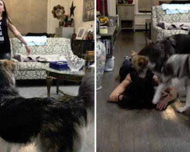 Dona Finge Desmaiar Em Frente Aos Seus Cães, Mas a Reação Deles Não Foi Nada Do Que Esperava 5
