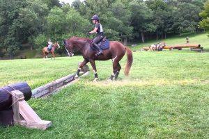 Cavalo Hesita Em Saltar Pequeno Obstáculo Mas Depois Tem Reação Inesperada 10