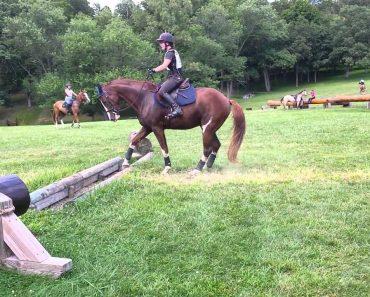 Cavalo Hesita Em Saltar Pequeno Obstáculo Mas Depois Tem Reação Inesperada 3