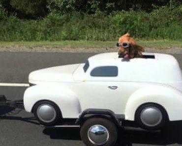 Cão Viaja Com Dono Mas... No Seu Próprio Carro 8