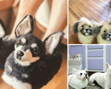 Empresa Cria Pantufas Personalizadas Com o Focinho Do Seu Animal De Estimação 1