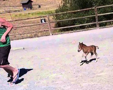 """Este """"Mini Cavalo"""" é o Mais Pequeno Cavalo do Mundo, Mas é Também o Mais Adorável 5"""