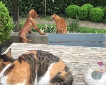 Gato Corre Em Socorro Do Seu Amigo Cão Para o Defender Do Ataque De Outro Gato 9