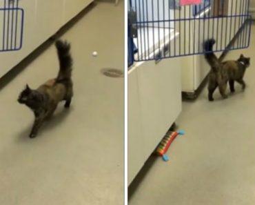 O Que Acontece Aos Gatos Quando Tentam Saltar De Um Chão Encerado? 5
