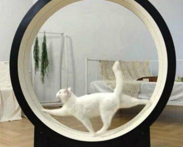 Empresa Coreana Cria Roda De Exercício Inteligente Para Gatos 8