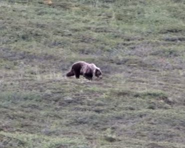 Como Se Comportaria Um Urso Se Tivesse Bebido Demais 2