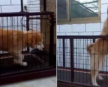 Cão Descobre Maneira De Evitar Fazer Os Exercícios Que o Dono Lhe Manda 8