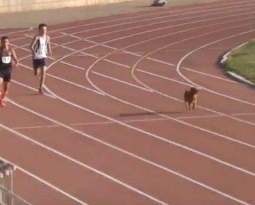 Cão Invade Prova De Atletismo e Termina Em Primeiro lugar 7
