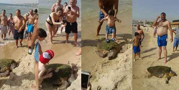 Turistas Deixaram Tartaruga Gravemente Ferida Ao Tirarem Fotos Em Cima Dela 1
