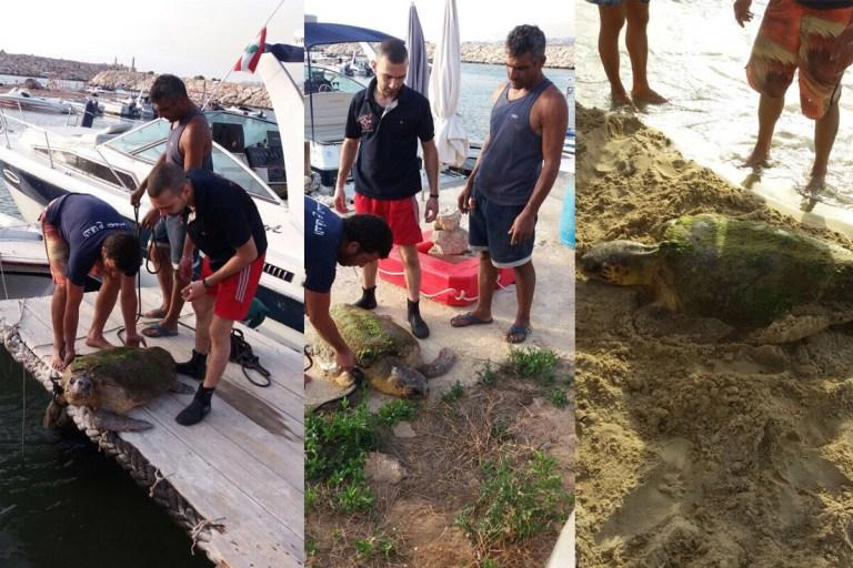 Turistas Deixaram Tartaruga Gravemente Ferida Ao Tirarem Fotos Em Cima Dela 3